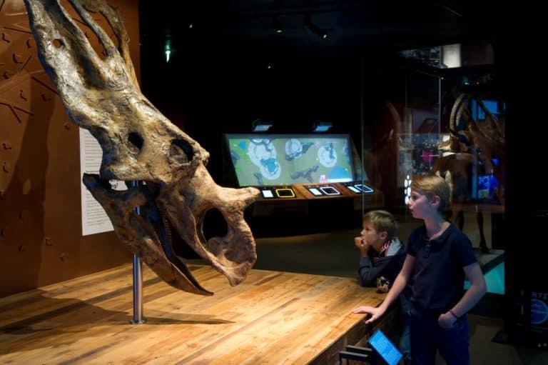 Avec les expositions du Muséum de Toulouse, la biodiversité est un jeu d'enfants