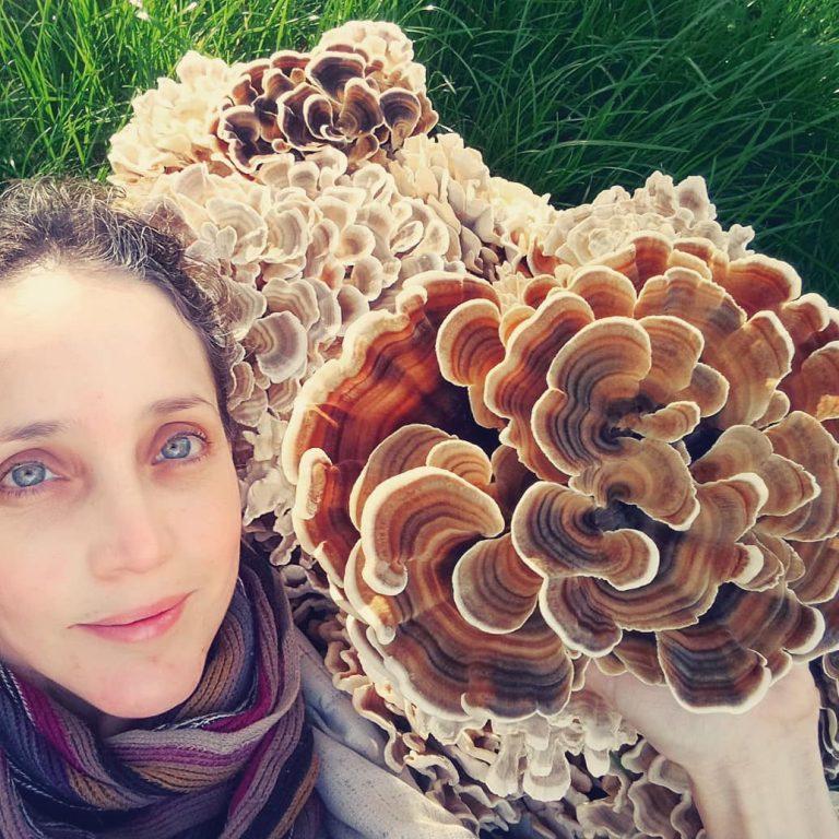Lauragais. 150 000 euros débloqués pour le projet Fungus Sapiens