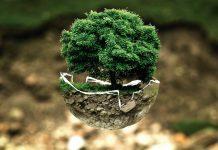 écologie environnement impact environnemental nature