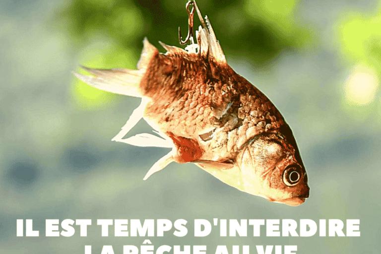 [TRIBUNE] L'association Paz demande l'interdiction de la pêche au vif, « une pratique particulièrement cruelle »
