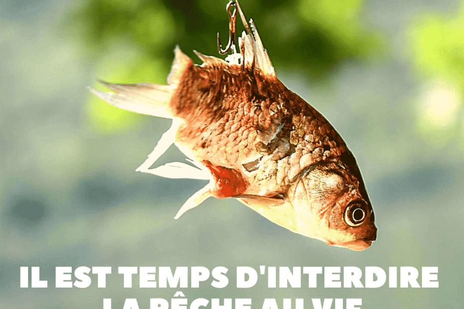 L'association Paris Animaux Zoopolis demande l'interdiction de la pêche à vif @PAZ