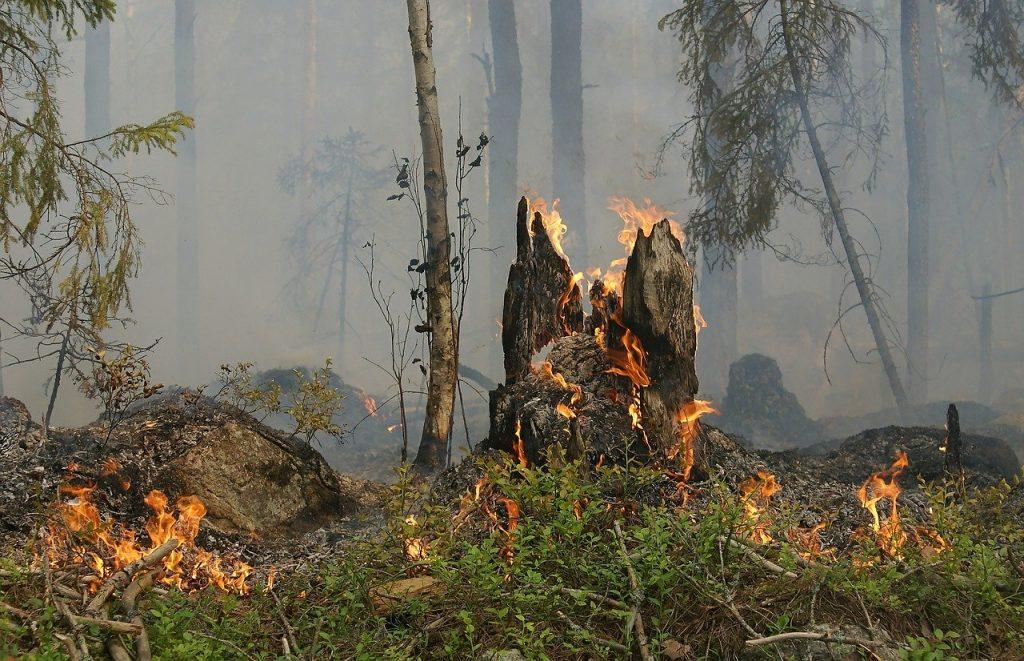 Illustration incendie en forêt. Licence Pixabay