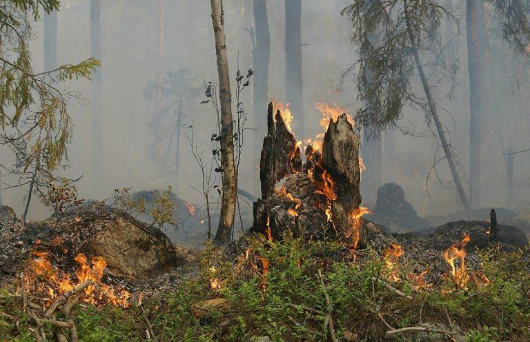 Gard. Une carte interactive pour prévenir des incendies en forêt