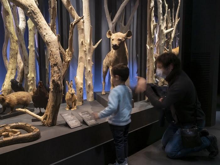 Pour la nuit des musées du 3 juillet prochain, le Muséum et le Quai des Savoirs de Toulouse proposent des soirée sur le thème de la magie et de l'amour