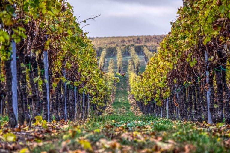 Tarn-et-Garonne. Un week-end ludique et festif autour des vignobles