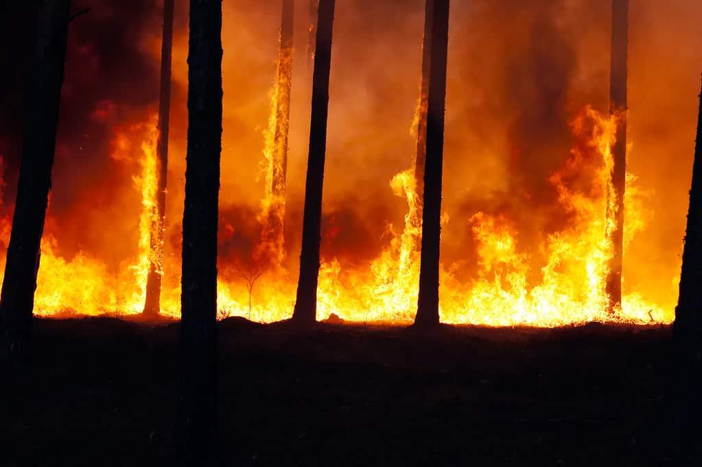 incendie-foret-feu