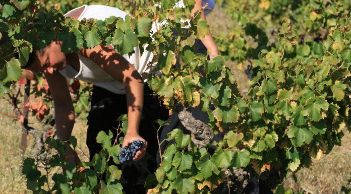 En Occitanie, les départements de l'Aude, du Gard et de l'Hérault ont mis en place un dispositif de cumul du RSA avec les revenus de certains emplois saisonniers @JeanLouis