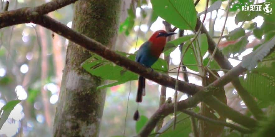 Rêv'earth reportage biodiversité singe