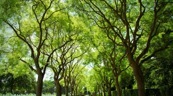 Aude Narbonne voie verte