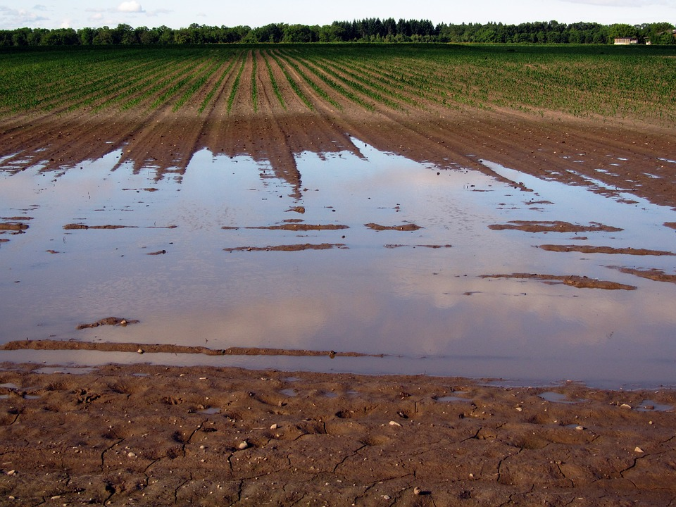 Tarn inondations calamité agricole